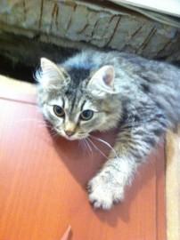 Маслена и Тема .Игривые и чудные котятки для вашей съемки - image.jpg