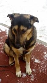Добрейший пёс для съёмок - IMAG0913.jpg
